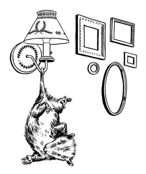 Opossum, Sconce, and Picture Frames by mlauritano