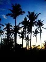 palm silhouettes by lorain05