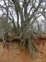 Roots II by bloodlust-stock