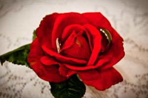 roses and rings by eyenoticed