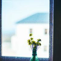 Flowers in the Window by MarinaCoric