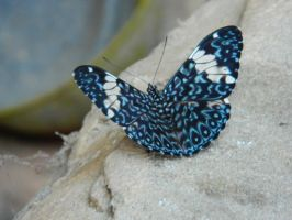blue butterfly by Elricthecat