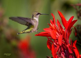Summer Hummer red by DGAnder