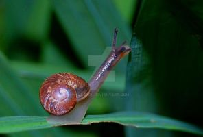 Snail's Pace by nEopol