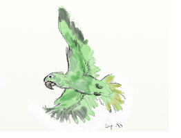 Parrot, #1 by Thymetenor