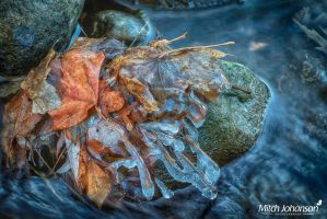 Ice Covered Leafs HDR by mjohanson