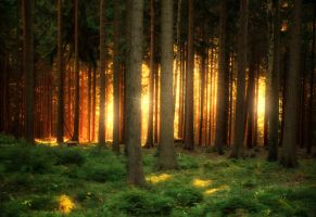 Backlit Forest by MarcoHeisler