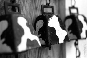 Cow Bells by evanjacobs