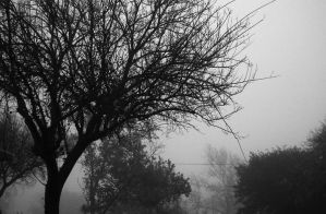 Foggy Trees by WidoPhoto