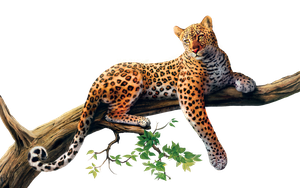 Jaguar PNG Stock 3 (3-3) by Gilgamesh-Art