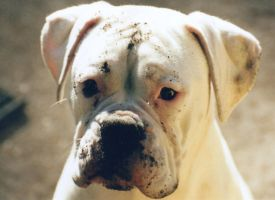 Tank with dirt on his face by mikedavis