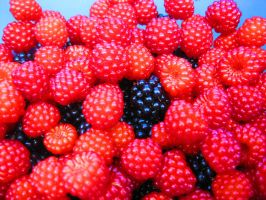 Wild Raspberries by Rachelgravesart