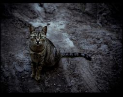 serbian cat by irremedios