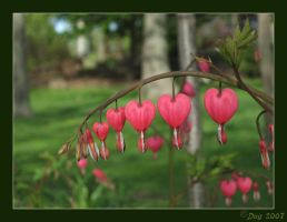Hearts in a Row by dugonline