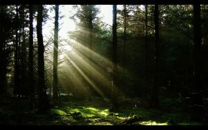 Like The Sun Through The Trees by phil2001