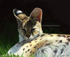 Serval by makangeni