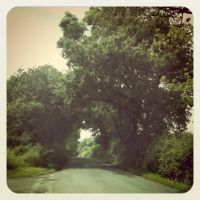 Old Country Lane by Copper-Wire