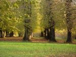 Autumn Park 7889361 by StockProject1