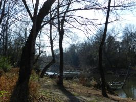 Woods at Milburnie Dam Scenic Photo by EKDuncan 4 by EveyD