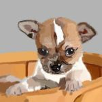 Chihuahua by Scribblebum