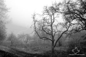 Its misty this morning by Cruzio