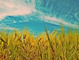 Wheatfield by Maraenna