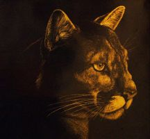 Mountain Lion Scratchboard by Skyelar