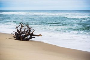 Cape Cod National Seashore by speedofmyshutter