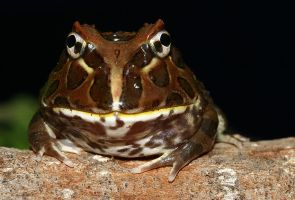 Happy smiley frog stock by AngiWallace