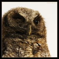 Little Owl 2 by Globaludodesign