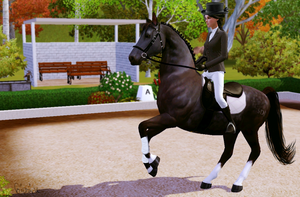 Dressage 1 - Picture TS3 by Gipsik