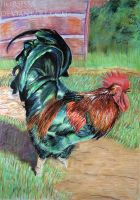 Rooster by Horsissa