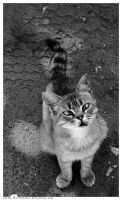 cat by gremo-photography