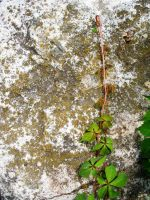 rock and ivy1 by lampshaded-stock