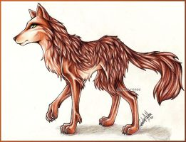 A brown wolf by nor-renee