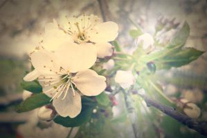 spring came into blossom by meisster
