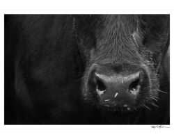 COW by TroyMcGoughInk