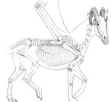 Amethyndra skeleton Study by Teggy