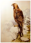 Golden Eagle by Atriedes