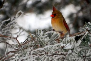 Momma Cardinal Frost by CoreyChiev
