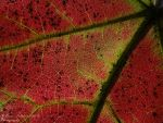 Famous Color of Fall by jellybean12365