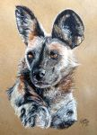 African Wild Dog by KristynJanelle