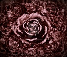 The lonely pink rose by Gothicmama