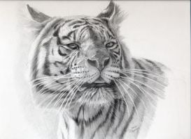 White Tigress portrait by sschukina
