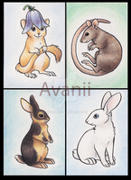 FOR SALE ACEOs: Small and Fluffy by Avanii