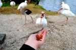 Feeding the Ibis by Oiseauarcenciel