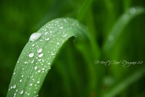 After rain by mj-gn