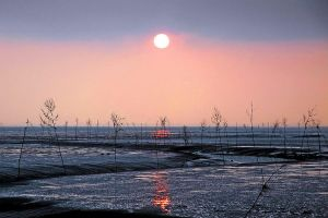 evening in the mudflat by augenweide