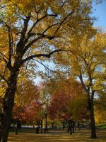 Fall in Boston by ananasringer