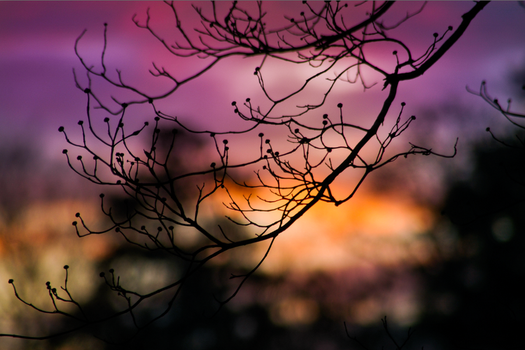 Sunset by MarilynTaylor